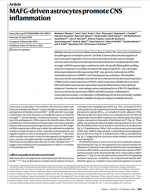 MAFG-driven-astrocytes