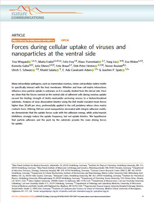 viruses-and-nanoparticles