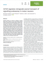 IGF1R-regulates-retrograde