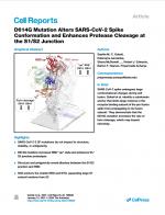 D614G-Mutation-Alters-SARS-CoV-2-Spike
