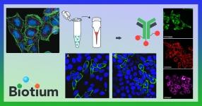 biotium-mix-n-stain
