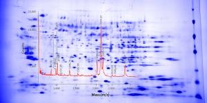 cygnus-hcp-detection