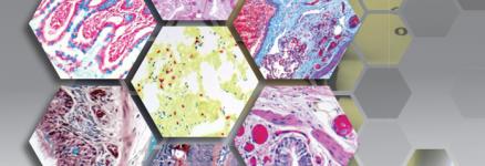 ScyTek-Special-Stains-Histology