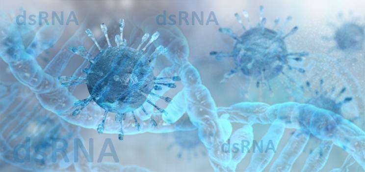 dsRNA-detection