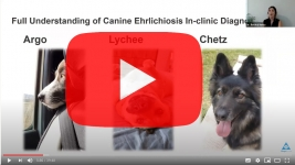 biogal-ehrlichia-canis