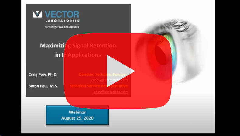 vector-if-signal-retention