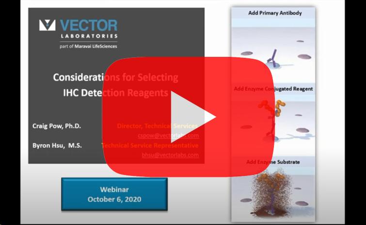 vector-ihc-detection-reagents