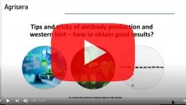 agrisera-antibody-production-validation