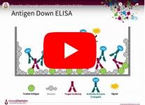 immunochemistry-elisa