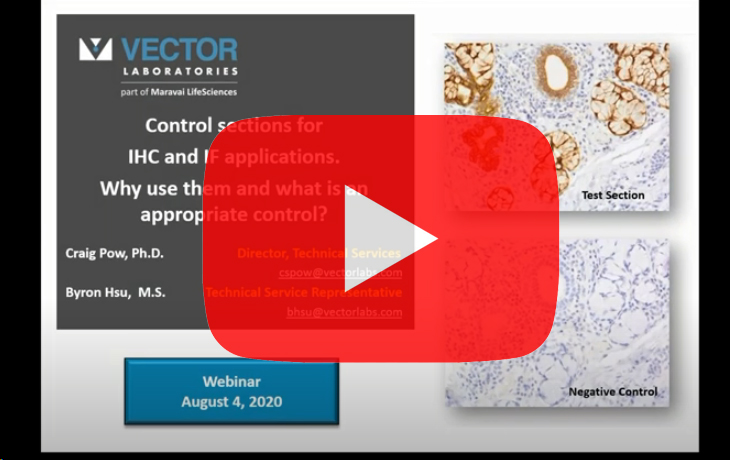 vector-ihc-control-sections