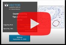 vector-ihc-counterstaining