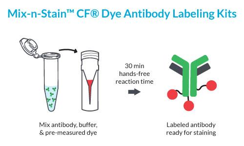 Prinzip der Mix-n-Stain Antikörper-Konjugation