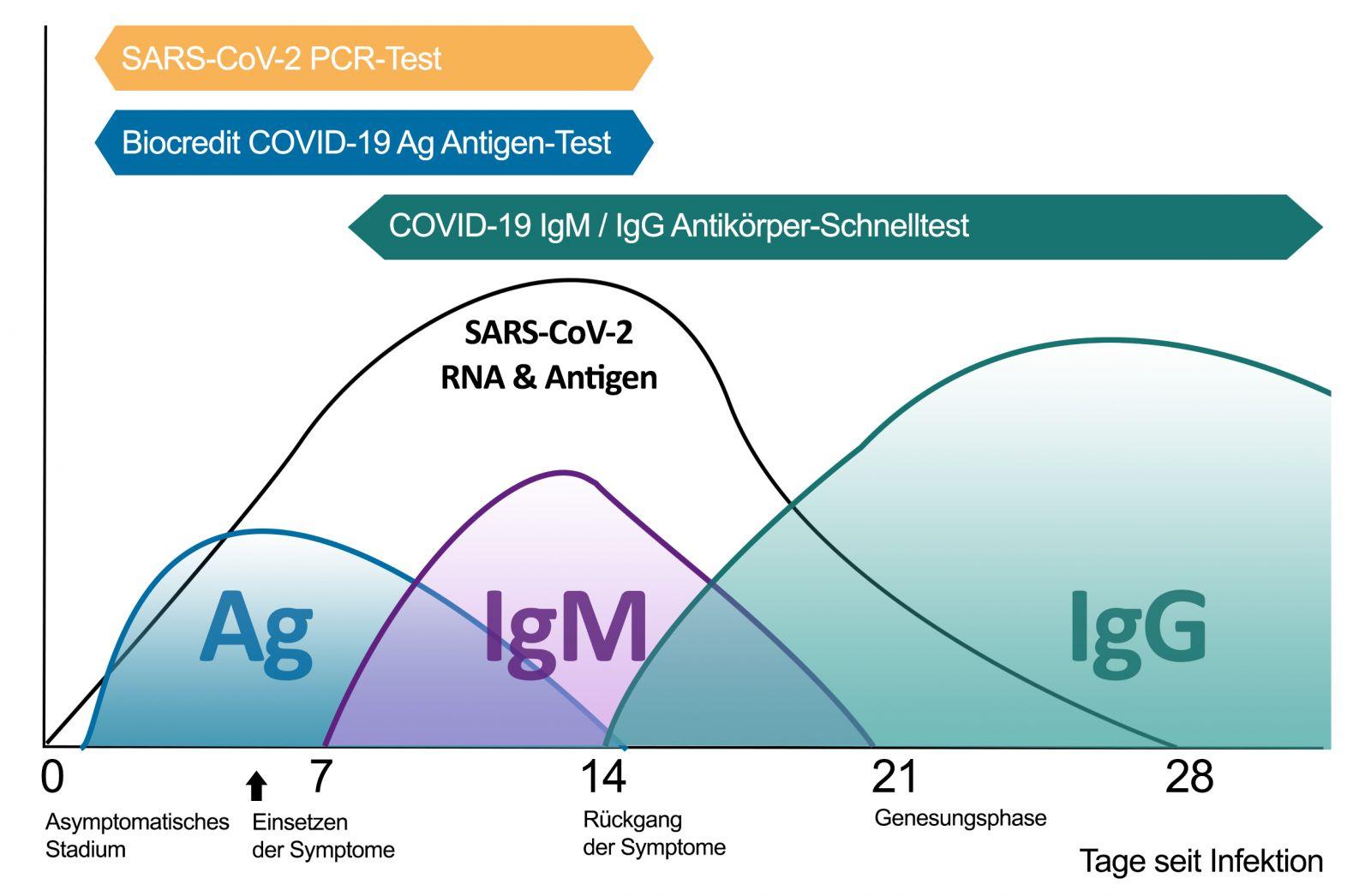 Antibody Response to COVID-19 Infection