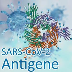 SARS-CoV-2 Antigene