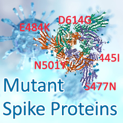 SARS-CoV-2 Mutant Spike Proteins
