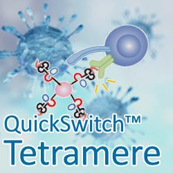 QuickSwitch Tetramer Plattfom und COVID-19-Peptide