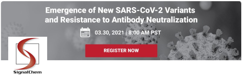 Emergence of New SARS-CoV-2 Variants and Resistance to Antibody Neutralization